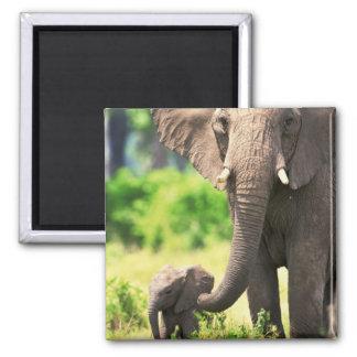 Elefante y bebé imán cuadrado