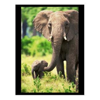 Elefante y bebé postales