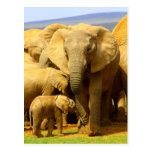 elefante y becerro postal