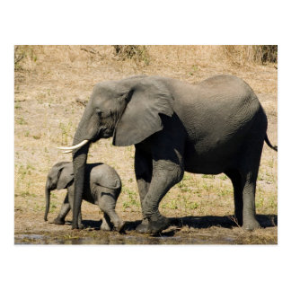 Elefante y madre del bebé tarjeta postal