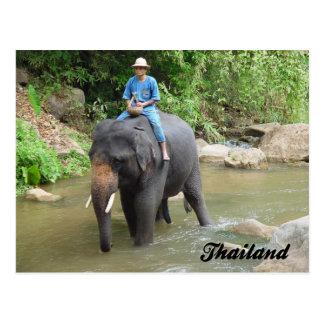 Elefante y Mahout postal de Chiang Mai, Tailandia