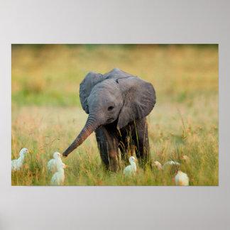 Elefante y pájaros del bebé póster