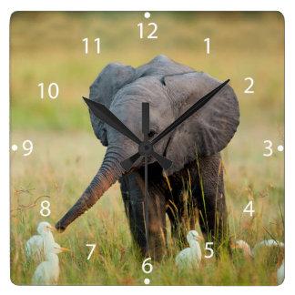 Elefante y pájaros del bebé reloj cuadrado