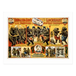 Elefantes 1899 del vintage de los Pachyderms de Ri Tarjetas Postales
