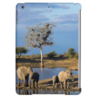 Elefantes africanos de Bush (Loxodonta Africana)