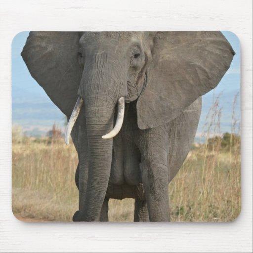 Elefantes africanos de los animales del destino de tapetes de raton
