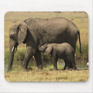 Elefantes africanos en la piscina de agua mouse pad