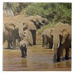 Elefantes africanos, Loxodonta Africana, Samburu Tejas Ceramicas