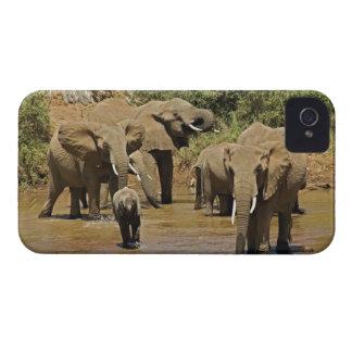 Elefantes africanos, Loxodonta Africana, Samburu Case-Mate iPhone 4 Funda