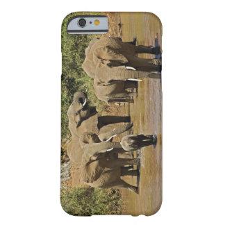 Elefantes africanos, Loxodonta Africana, Samburu Funda De iPhone 6 Barely There