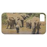 Elefantes africanos, Loxodonta Africana, Samburu iPhone 5 Fundas