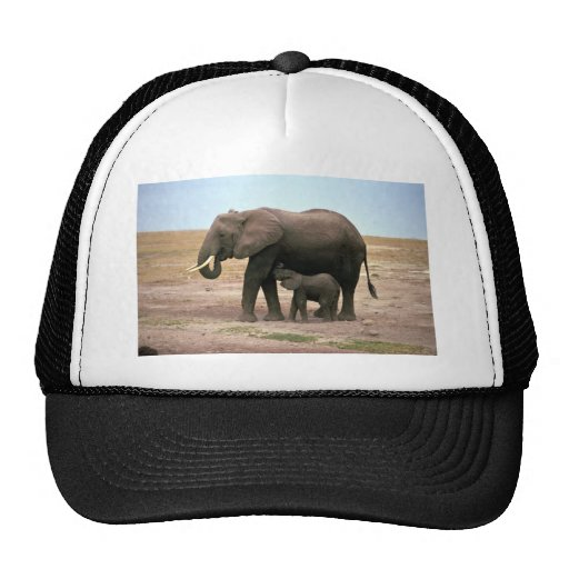 Elefantes africanos - pequeño oficio de enfermera  gorras