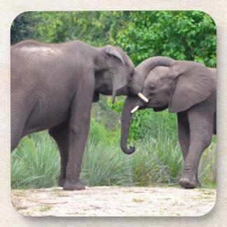 Elefantes africanos que obran recíprocamente posavasos