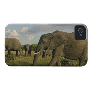 Elefantes africanos que pastan, africana del Loxod iPhone 4 Fundas
