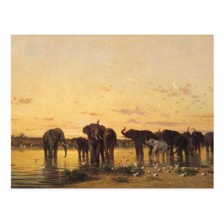 Elefantes africanos tarjeta postal