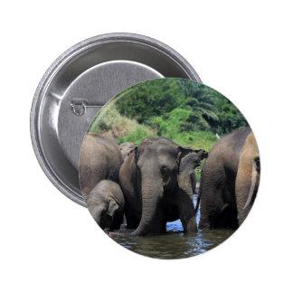Elefantes asiáticos en el río Sri Lanka Pins