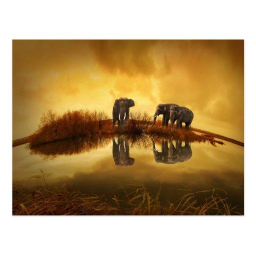 Elefantes asiáticos postal
