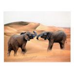 Elefantes en el desierto tarjetas postales