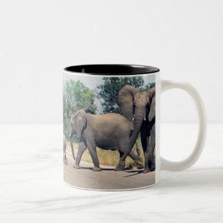 Elefantes en el parque de Kruger Taza De Café De Dos Colores