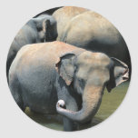 Elefantes en el río Sri Lanka Pegatina Redonda