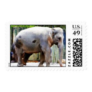 Elefantes en un parque zoológico timbre postal