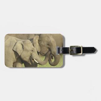 Elefantes indios/asiáticos que comparten a etiquetas de maletas
