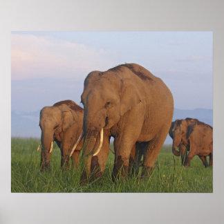 Elefantes indios en el prado, Corbett Posters