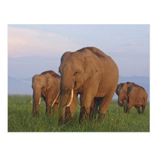 Elefantes indios en el prado, Corbett Postal