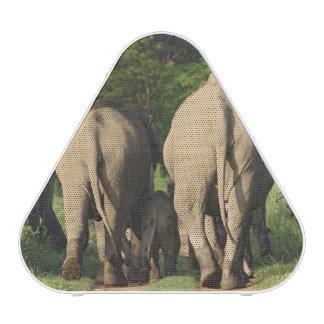 Elefantes indios en la pista de la selva, Corbett Altavoz Bluetooth