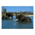 Elefantes indios que se acuestan, bañándose felicitaciones