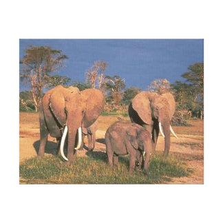 Elefantes Impresión En Lona