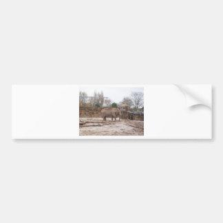 Elefantes Pegatina Para Auto