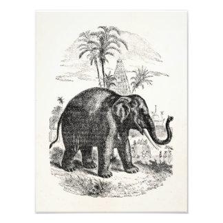 Elefantes personalizados del elefante asiático del fotografías