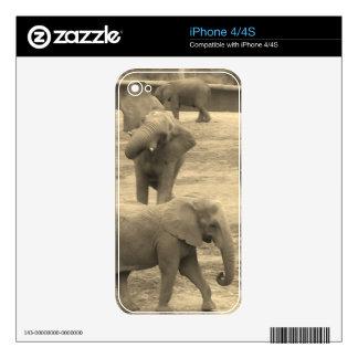 Elefantes - por la sabana del helecho iPhone 4S calcomanía