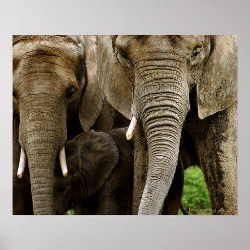 Elefantes Póster