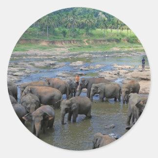 Elefantes que se bañan en el río Sri Lanka Pegatina Redonda