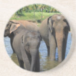 Elefantes que se bañan en el río Sri Lanka Posavasos Personalizados