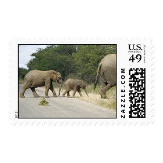 Elefantes Envio