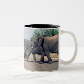 Elefantes Taza