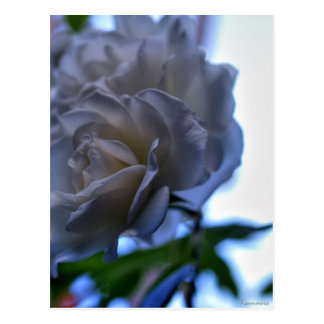 Elegance & Beauty Postcard