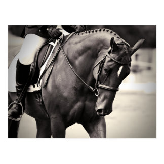 Elegance - Dressage Horse Postcard
