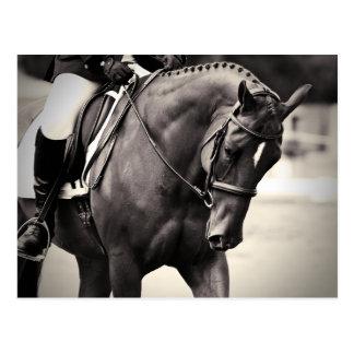 Elegancia - caballo del Dressage Tarjeta Postal