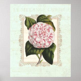 Elegancia lamentable de la camelia rosada y blanca póster