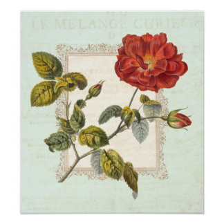 Elegancia lamentable del rosa rojo del vintage póster