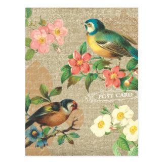 Elegancia lamentable rústica de los pájaros y de postal