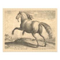 Elegant Antique Engraving of Spanish Horse Flyer