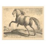 Elegant Antique Engraving of Spanish Horse Flyers