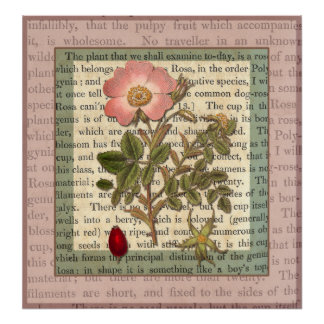 Elegant Antique Pink Rose Vintage Collage Poster