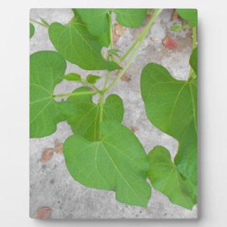 Elegant Bean Plant Photography Plaque