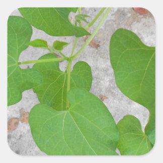 Elegant Bean Plant Photography Square Sticker